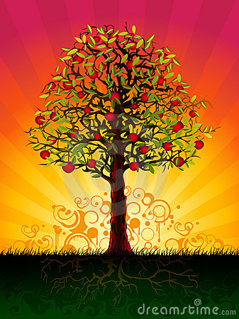 Apple tree in the evening