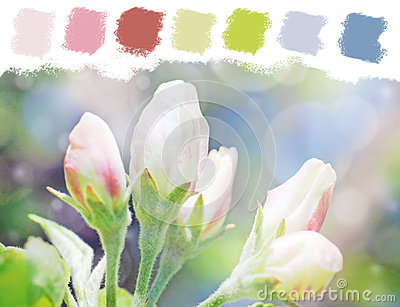 Apple tree flower buds color palette