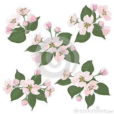 Apple tree flowers and green leaves set