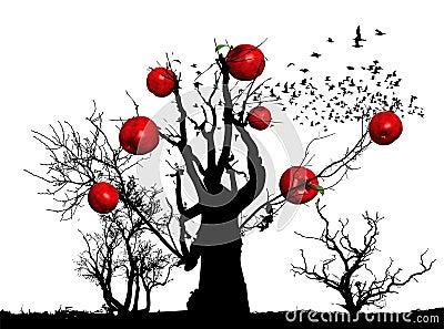 Apple tree / orchards