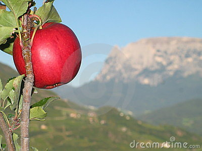 Apple on the Tree with Striking Italian Mountains