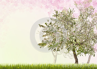 Apple trees with flowers in green grass