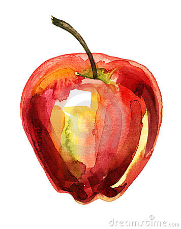 Apple watercolor illustration
