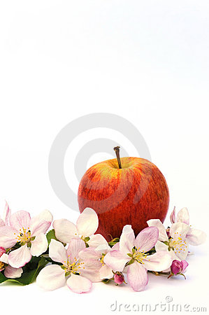 Free Apples And Apple-tree Blossoms Stock Photo - 17924410