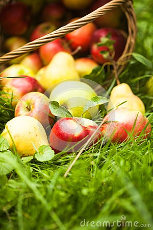 Free Apples And Pears On The Grass Stock Image - 36696751