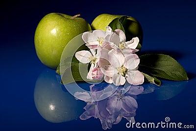 Apples & Blossom