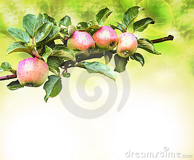 Apples branch background