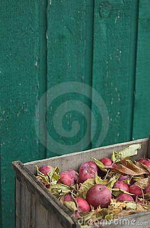Apples in crate portrait