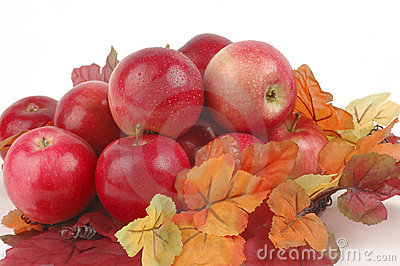 Apples and Fall Foliage