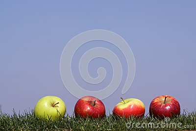 Apples in grass
