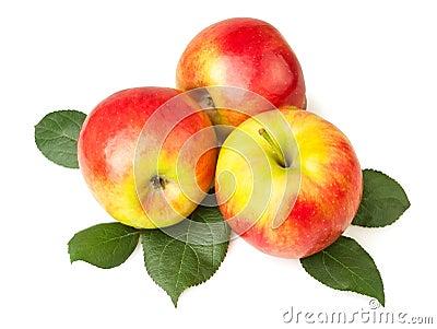 Apples on leaves