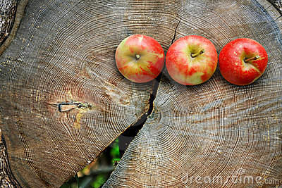 Apples on  tree trunk cut