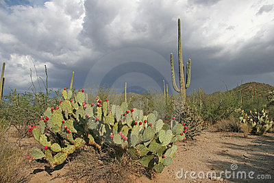 Approaching Rain Clouds - Sonora Desert