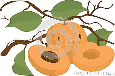Apricoat