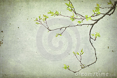 An apricot branch tree with leaves