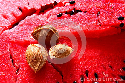 Apricot kernel on watermelon