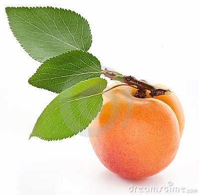 Apricot with leaf.