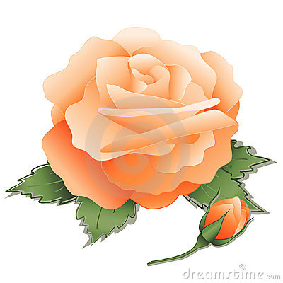 Apricot Rose and Bud