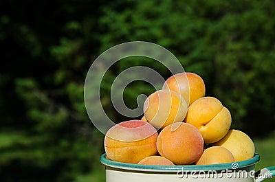 Apricots closeup