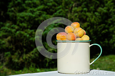 Apricots in a cup
