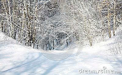 April snow forest
