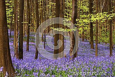 April woods
