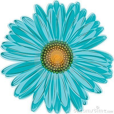 Aqua blue daisy flower