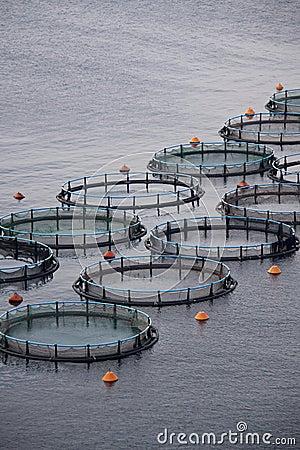 Free Aquaculture Royalty Free Stock Photos - 15489748