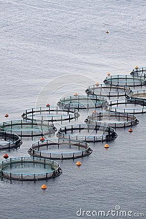 Free Aquaculture Stock Image - 15490481