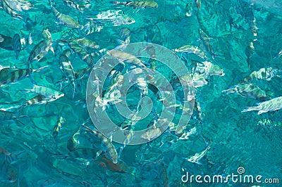 AquaMarine Canvas