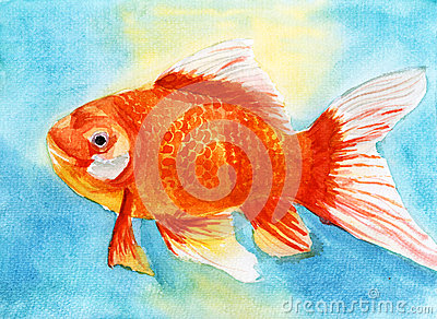 Aquarelle de poisson rouge de bain images libres de droits for Achat de poisson rouge