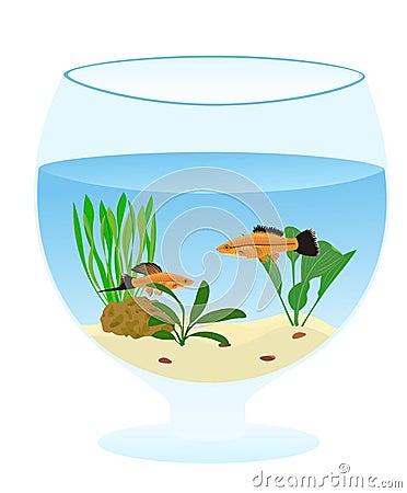 Free Aquarium Stock Images - 7483574