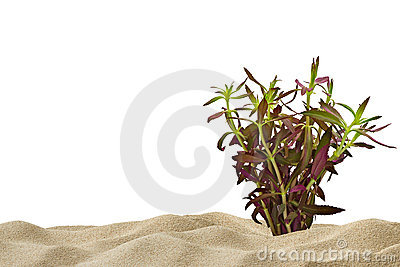 Aquarium background with purple plant