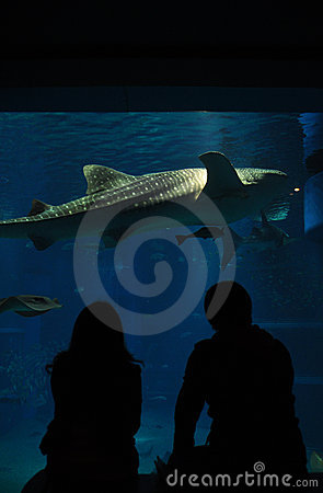 Aquarium date with shark
