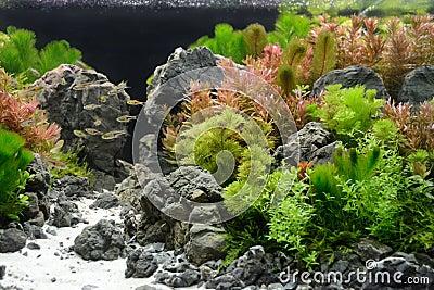 Aquarium decoration