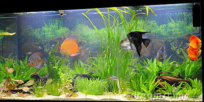 Aquarium - Exotic Fish Species Royalty Free Stock Image - Image ...