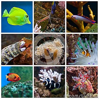Free Aquarium Fish Royalty Free Stock Photography - 19975387