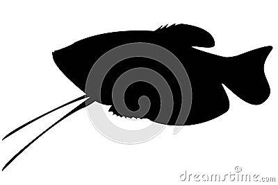 Aquarium fish isolate