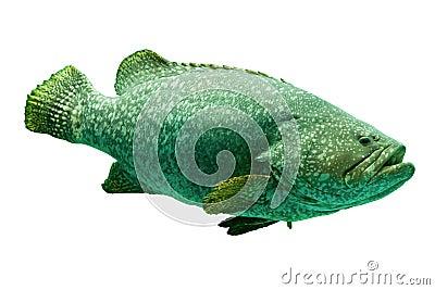 Aquarium fish isolate on white