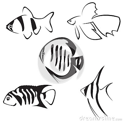 Aquarium fish. Line drawing in black and white. Keywords: