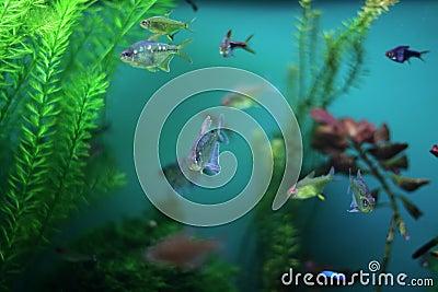 Aquarium fish seaweed