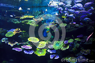 Aquarium with fishes and reef