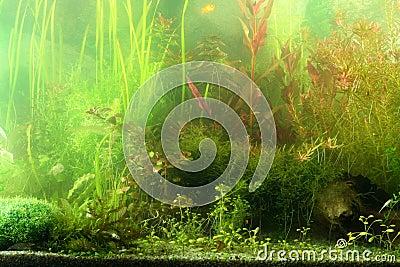 Aquarium landscape