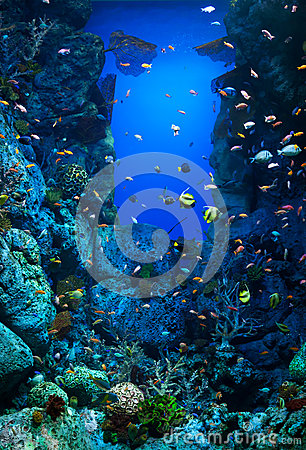 Aquarium with many varieties of corals and colorful marine fishes