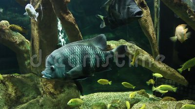 Aquarium met exotische vissen stock footage