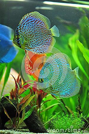 Poisson Tropical Aquarium - Animalerie, Maison &