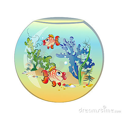 Aquarium rond avec des poissons photographie stock libre for Achat aquarium rond
