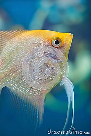 Aquarium small fishes.