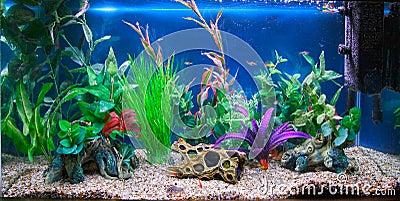 Aquarium et meuble pour aquarium - zoomaliacom