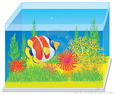 Aquarium with a tropical fish